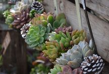garden projects / Things I would like to do in the garden