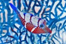 Nature.Fish / by Daniel Walsh