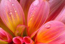 flowers/ bloemen