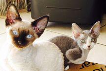 Lili & Mynx / Furr Babies