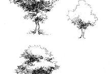Drawing/Nature