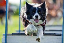 Dogs & Behaviour