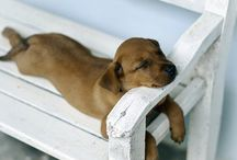 Any Place is a Good Place for A Snooze / by Linda McHardy