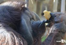 Kingdom of the Apes / From orangutans to gorillas, come be inspired by these amazing animals.