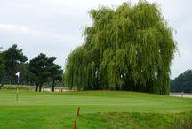 Schmitzhof OPEN Tag 2 / Golf Open