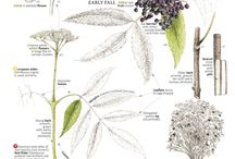 Herbalism and culinary flower ideas