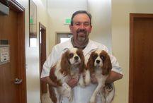 Veterinary Practices