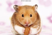 2015 Hamsters Calendar / by MegaCalendars.com