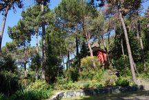 Park / ll parco della Francesca si estende per 15 ettari ha su di una collina che arriva fino al mare. La vegetazione è strettamente legata alla qualità del suolo: pini, alberi da frutto, agrumi,  fiori e gli arbusti sempreverdi della macchia mediterranea, come il mirto, l'alaterno, il lentisco,che sopportano bene la siccità; hanno foglie coriacee, lucide, idrorepellenti; l'erica, il rosmarino, il ginepro, invece, riducono la foglia per sopravvivere durante l'estate.