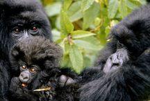 Mapendano Voyages / Mapendano Voyages est un tour operator enregistré au Rwanda et basé  à Kigali, avec 2 filiales enregistrées chacune dans son pays respectif, une  à Entebbe en Ouganda, l'autre  à Goma en RD Congo, ce qui nous permet d'opérer sur l'ensemble de l'Afrique Centrale. Des jeunes issus des divers pays de la région et des Français actifs dans le tourisme depuis une vingtaine d'années forment l'ossature de l'agence.