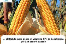Blat de moro / Maíz / Aquí trobaràs curiositats sobre el blat de moro / Aquí encontrarás curiosidades sobre el maíz
