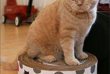 DIY Cat Hacks / Ideas for cats.