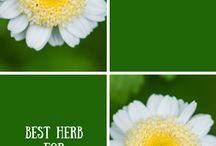 The best flowering herbs / The best flowering herbs to use for a border, a vase and fragrance
