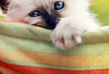 Kočky - Cats