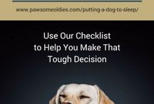 Pet Loss / Articles on pet loss, pet loss quotes, pet loss poems  and support on coping with the various grieving stages of losing a pet.