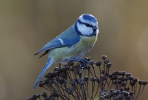 Birds and Animals / Enjoy ....