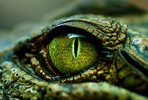 Reptiles & Amphibians / by Crystal Williams