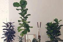 .plantas.