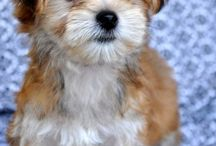 ADORABLE PETS / by Ginger Bagwell