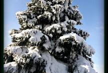 Fun in the Snow / by Heather Heinzer