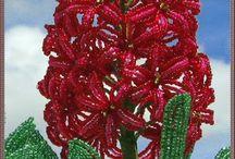 hiacint