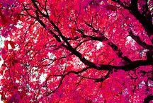 Colour / by Alison Hannagan