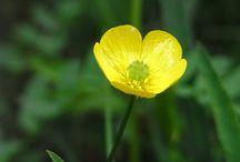 Blumen / Blumen die einem begegnen, ob im Wald, auf der Wiese oder im Garten und oft haben sie keinen Namen.