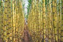 tropický pás / obrázků plodin a rostlin