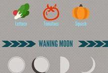 Jardín - ciclos lunares