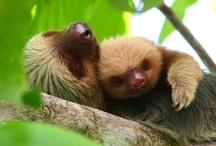 Sloths: My New Fave Animal! / by Jamarta Porter