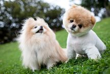 Make Me Go Awwwwh! / Cute photo's of dogs