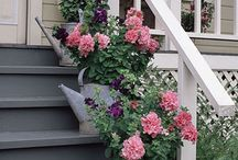 Curb Appeal / by Linda Knight
