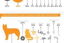 Información acerca de nuestras mascotas. / Información que debemos tener en cuenta para mejorar la calidad de vida de nuestras mascotas.