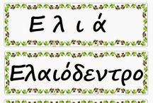 Ελιά-ελαιόλαδο