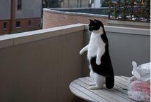 Gatti in pose curiose