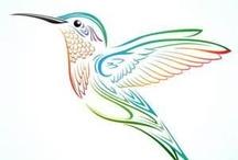 Colibri / ilustração de colibri