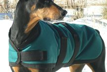 Dobermans - Coats; Collars