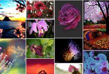 Nice flowers / Purple flowers