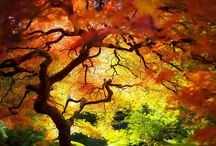 autumn / The specific smells, colors and lights of fall charm everyone. Just think about the yellow, red and brown leaves covering the trees as well as the ground under your feet. Isn't it one of the greatest sensations?