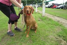 Charity Dog Show, George's new wheelchair, at Asfordby Football Club, 25th July 2016