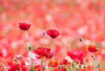 flower - wildlife