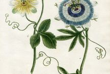 Botany Drawings