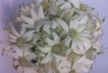 Flower arrangements / Potential wedding boquets