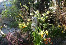 mijn tuin / foto,s van mijn tuin