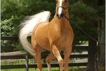 Horses / by Debra Kiper
