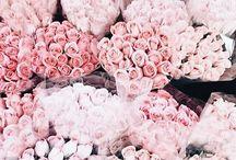 Rose ☼