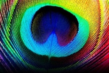 Peacock / by Pearl Manwani