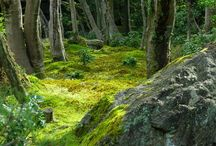 Verdant Verde
