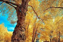 Beau Nature