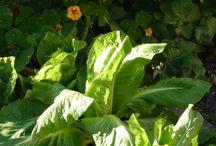 Veggie growing / Sun & shade for veggies